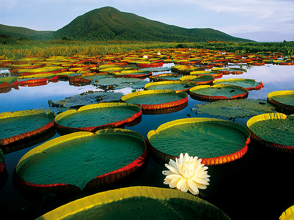 Amazonas Espectacular