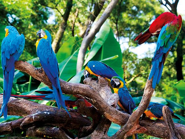 Lodge Amazónico Napo Wild Life Center